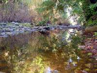 creek-reflection.jpg